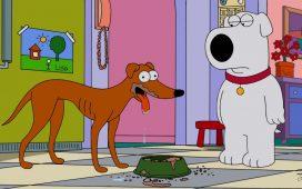 dog day, día internacional del perro
